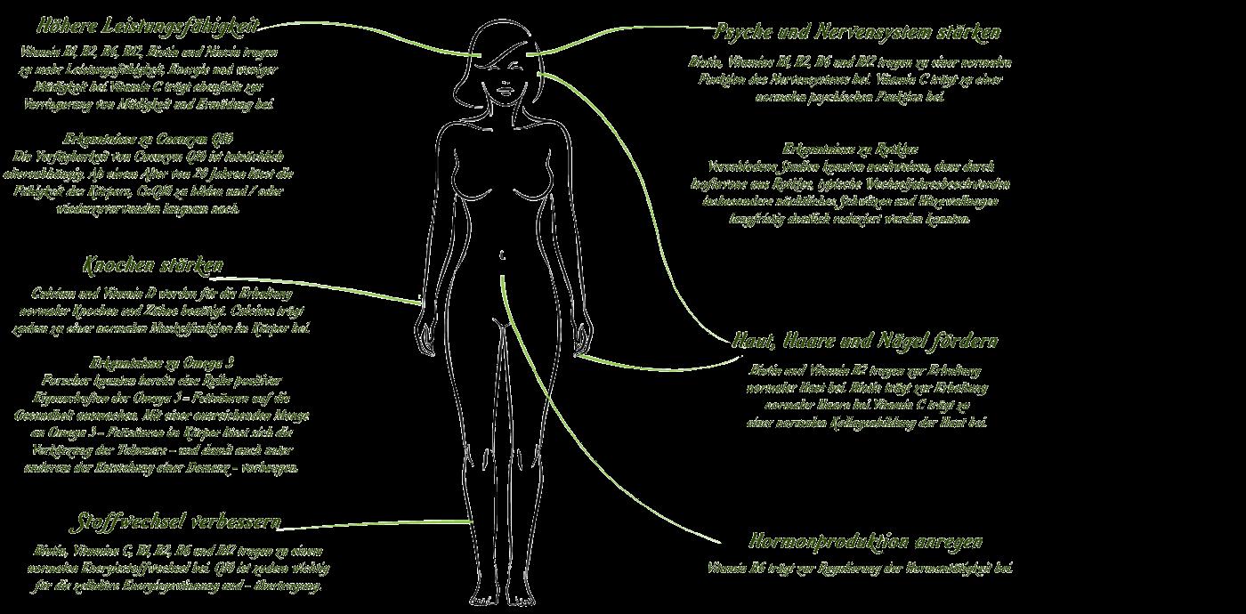 pflanzliche hormone gegen wechseljahresbeschwerden